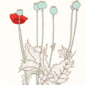 9 poppy